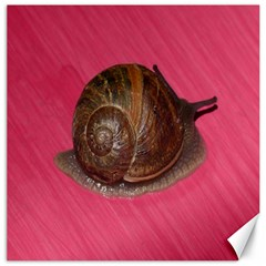 Snail Pink Background Canvas 20  x 20