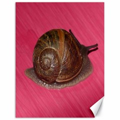 Snail Pink Background Canvas 18  x 24