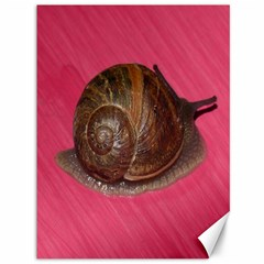Snail Pink Background Canvas 36  x 48