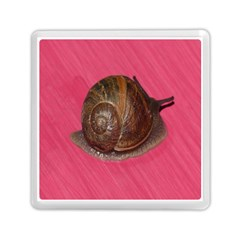 Snail Pink Background Memory Card Reader (Square)