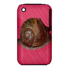 Snail Pink Background iPhone 3S/3GS
