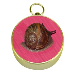 Snail Pink Background Gold Compasses