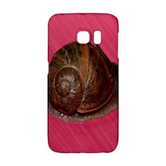 Snail Pink Background Galaxy S6 Edge