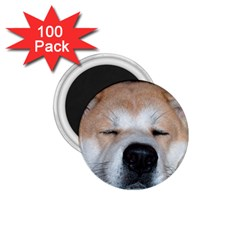 Akita Sleeping 1.75  Magnets (100 pack)
