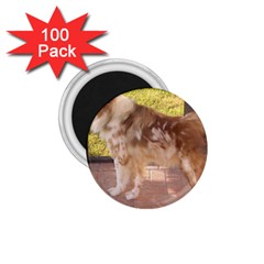 Australian Shepherd Red Merle Full 1.75  Magnets (100 pack)