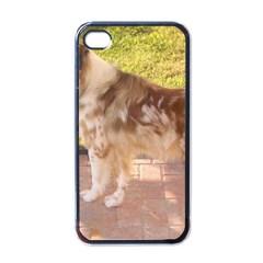 Australian Shepherd Red Merle Full Apple iPhone 4 Case (Black)