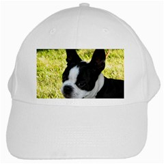 Boston Terrier Puppy White Cap