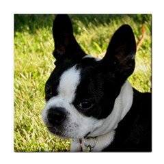 Boston Terrier Puppy Tile Coasters