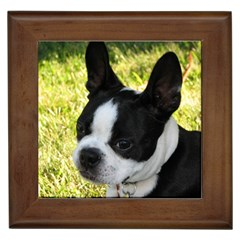 Boston Terrier Puppy Framed Tiles