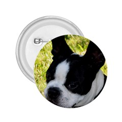 Boston Terrier Puppy 2.25  Buttons