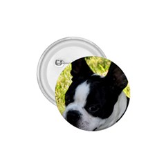 Boston Terrier Puppy 1.75  Buttons