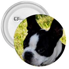 Boston Terrier Puppy 3  Buttons