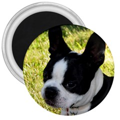 Boston Terrier Puppy 3  Magnets