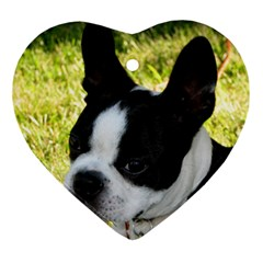 Boston Terrier Puppy Ornament (Heart)
