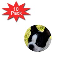 Boston Terrier Puppy 1  Mini Magnet (10 pack)