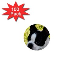 Boston Terrier Puppy 1  Mini Buttons (100 pack)