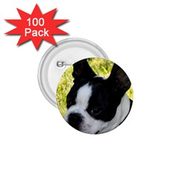 Boston Terrier Puppy 1.75  Buttons (100 pack)