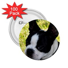 Boston Terrier Puppy 2.25  Buttons (100 pack)