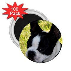 Boston Terrier Puppy 2.25  Magnets (100 pack)