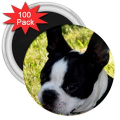 Boston Terrier Puppy 3  Magnets (100 pack)
