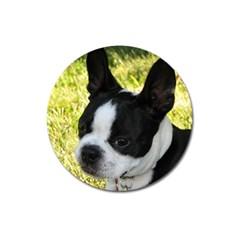 Boston Terrier Puppy Magnet 3  (Round)
