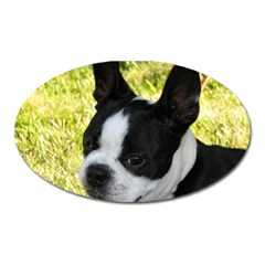 Boston Terrier Puppy Oval Magnet