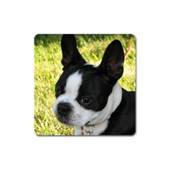 Boston Terrier Puppy Square Magnet