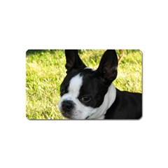 Boston Terrier Puppy Magnet (Name Card)