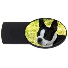 Boston Terrier Puppy USB Flash Drive Oval (2 GB)