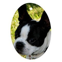 Boston Terrier Puppy Oval Ornament (Two Sides)
