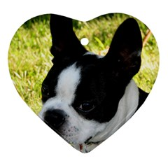 Boston Terrier Puppy Heart Ornament (2 Sides)