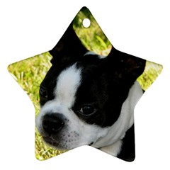 Boston Terrier Puppy Star Ornament (Two Sides)