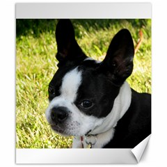 Boston Terrier Puppy Canvas 8  x 10
