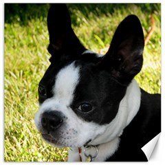 Boston Terrier Puppy Canvas 12  x 12