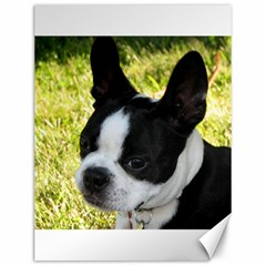 Boston Terrier Puppy Canvas 12  x 16