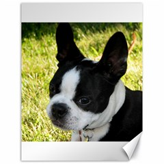 Boston Terrier Puppy Canvas 18  x 24