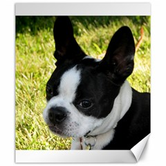 Boston Terrier Puppy Canvas 20  x 24