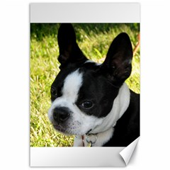 Boston Terrier Puppy Canvas 24  x 36
