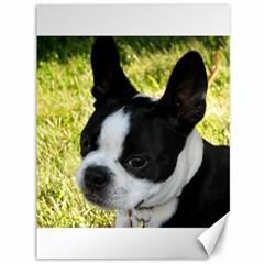Boston Terrier Puppy Canvas 36  x 48