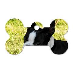 Boston Terrier Puppy Dog Tag Bone (One Side)