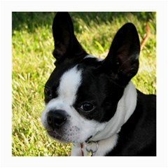 Boston Terrier Puppy Medium Glasses Cloth