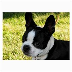 Boston Terrier Puppy Large Glasses Cloth