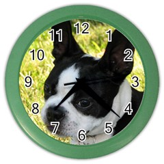 Boston Terrier Puppy Color Wall Clocks
