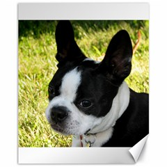 Boston Terrier Puppy Canvas 11  x 14