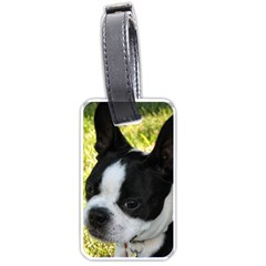 Boston Terrier Puppy Luggage Tags (One Side)