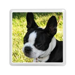 Boston Terrier Puppy Memory Card Reader (Square)