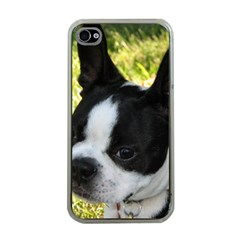Boston Terrier Puppy Apple iPhone 4 Case (Clear)