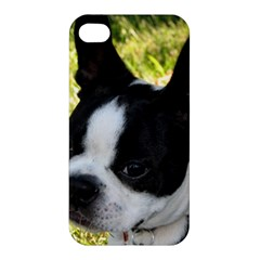 Boston Terrier Puppy Apple iPhone 4/4S Hardshell Case