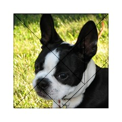 Boston Terrier Puppy Acrylic Tangram Puzzle (6  x 6 )