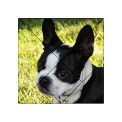 Boston Terrier Puppy Acrylic Tangram Puzzle (4  x 4 )